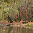 Pond in autumnal park — Stock fotografie