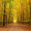 Pathway in the autumn forest — Stock Photo #6389909