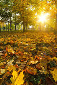Yellow autumn leaves — Stock Photo