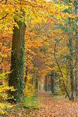 Väg i skogen höst — Stockfoto