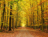 Pathway in the autumn forest — Stock Photo
