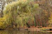 Vijver in herfst park — Stockfoto