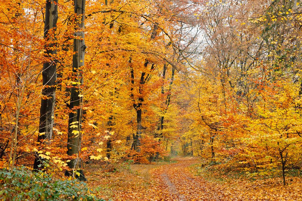 Autumnal forest  Stock Photo #6385521