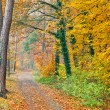 Pathway in the autumn forest — Stock Photo #6394514