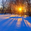 Beautiful sunset in a winter forest - Stock Photo