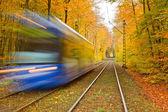 Railway in autumn forest — Stock Photo