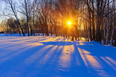 Beautiful sunset in a winter forest — Stock Photo