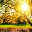 Sunlighted yellow autumn tree — Stock Photo