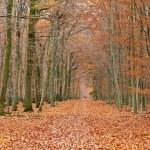 Pathway in the autumn park — Stock Photo #6454820
