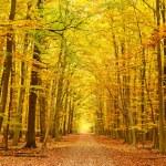 percorso nel parco d'autunno — Foto Stock