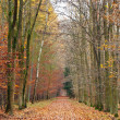 Pathway in the autumn forest — Stock Photo #6455191