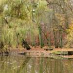 estanque en el parque otoñal — Foto de Stock