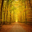 Pathway in the autumn forest - Stockfoto