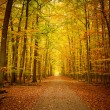 Pathway in the autumn forest - Photo