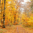 Colorful autumn forest — Stock Photo