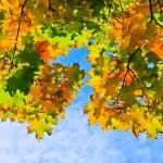 Multicolored autumn maple leaves — Stock Photo