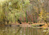 Pond in autumnal park — Stock Photo