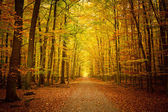 Pathway in the autumn forest — Stock fotografie