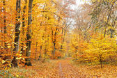 Colorful autumn forest — Stok fotoğraf