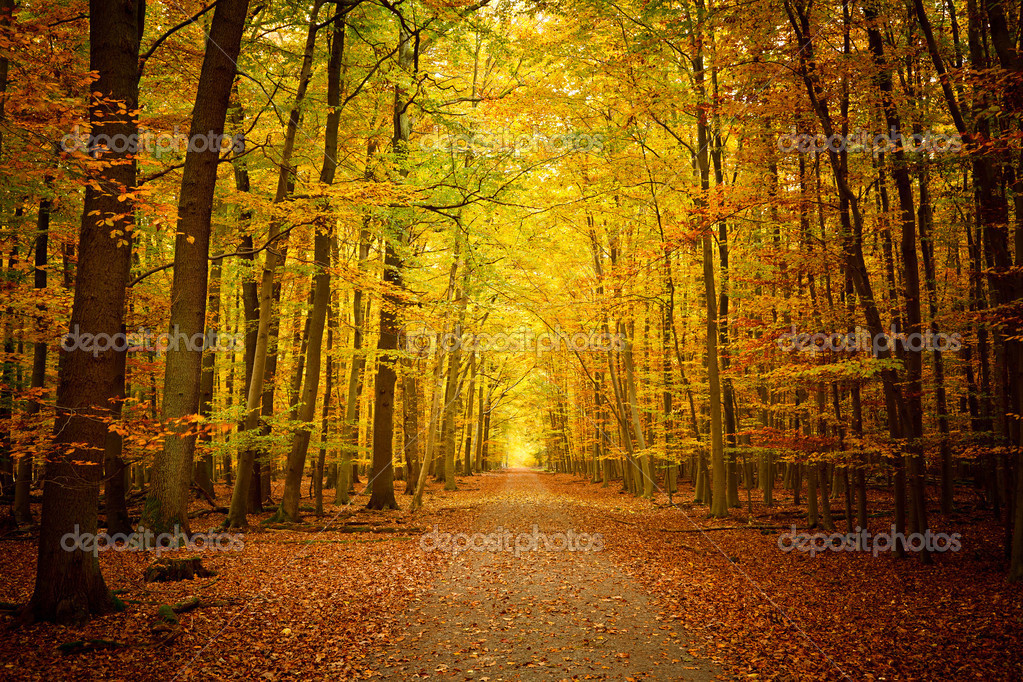 Pathway in the autumn forest — Stock Photo #6455974