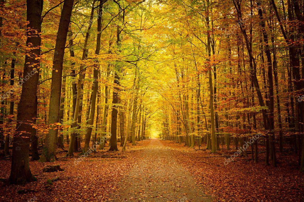 Фотообои Тропа в осеннем лесу