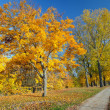 colorful autumn — Stock Photo #6694715