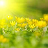Soft-focus close-up of yellow flowers — Foto de Stock