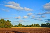 Platteland op zomer — Stockfoto