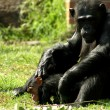 Chimpanze — Stock Photo #6083801