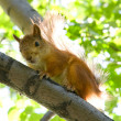 Foto Stock: Squirrel at tree
