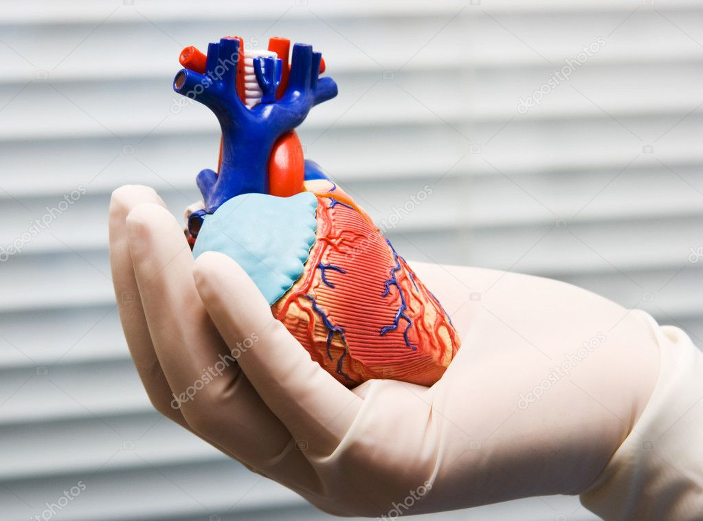 Human heart in doctor's hand with glove  Stock Photo #6096693
