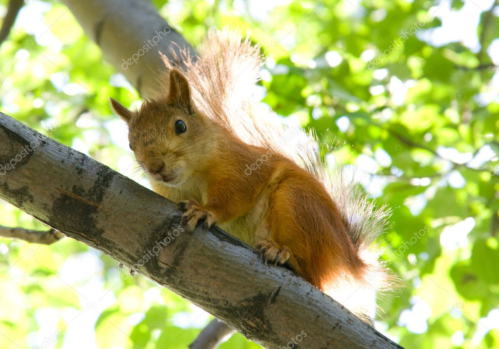 Squirrel sitting at tree  — Stock Photo #6096884