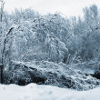Snow river in forest - Stock Photo