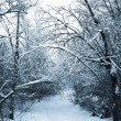 Snow-covered path in winter forest - Stock Photo