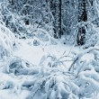 Snow in winter forest. - Stock Photo