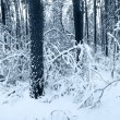Snow panorama in winter forest - Stock Photo