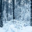 Snow trees in winter forest - Stock Photo