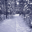 Snow path in winter forest - Stock Photo