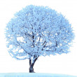Frozen tree — Stock Photo #6335382