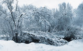 Snow river in forest — Stock Photo