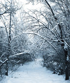 Snow-covered path in winter forest — Stock Photo
