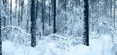 Snow trees in winter forest — Stock Photo