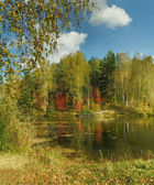 Fall in forest — Stock Photo