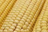Corn cob — Foto Stock