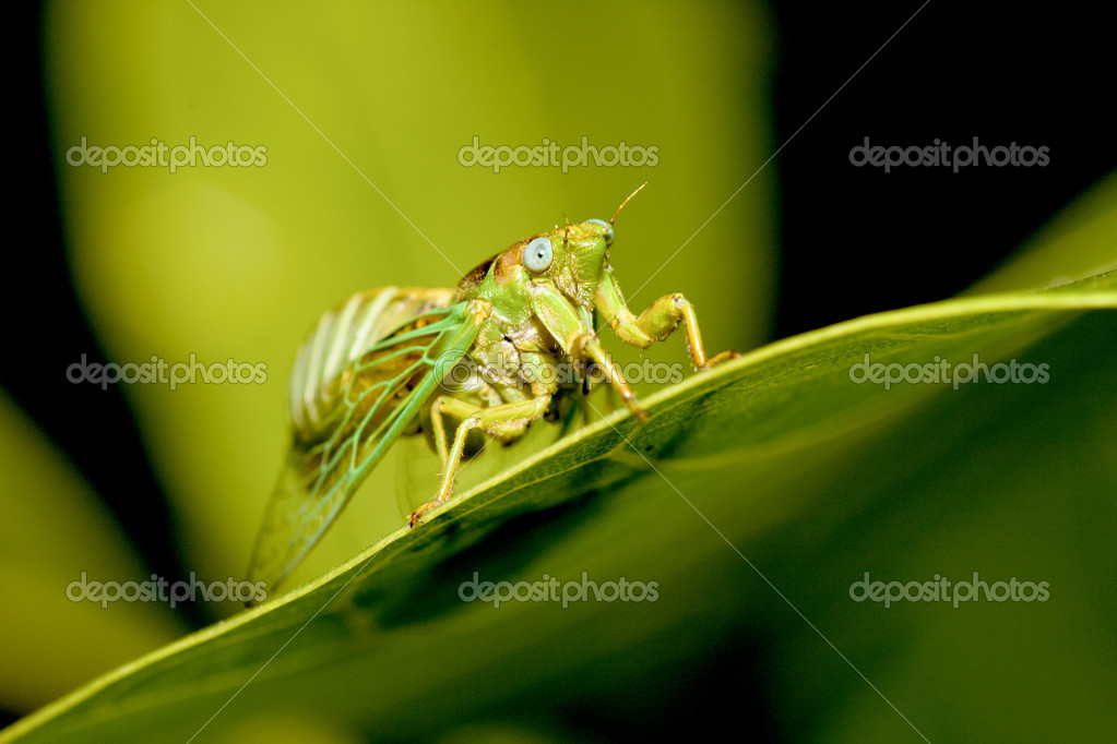 A cicadas stay on plant  Stock Photo #5949279