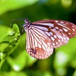 Stock Photo: Butterfly stay on leaf
