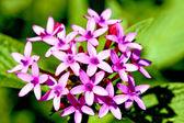 Molte fioriscono flora — Foto Stock