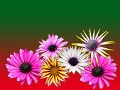 Różne kwiaty — Zdjęcie stockowe