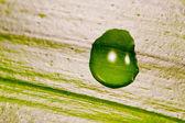 葉に水滴 — ストック写真
