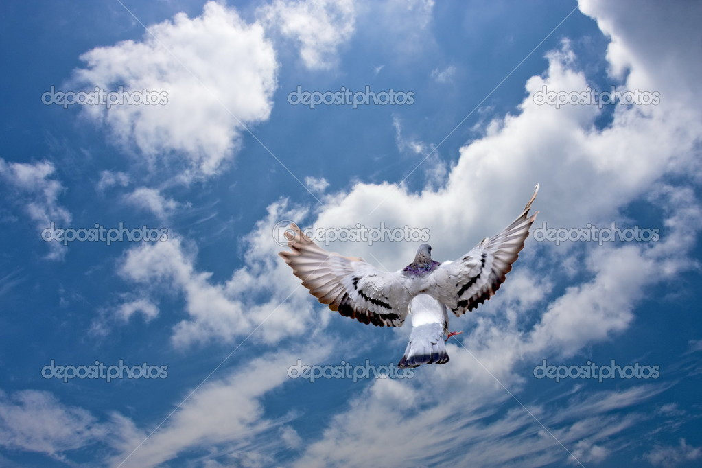 A pigeon fly in the blue cloudy sky — Stock Photo #6227664